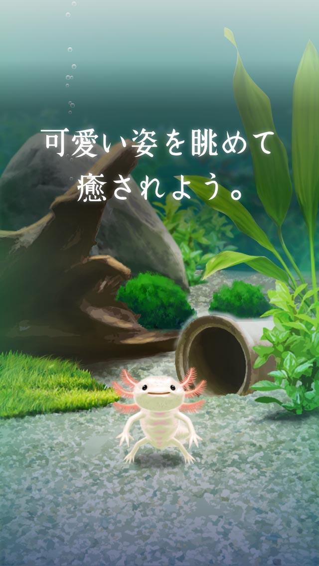 癒しのウーパールーパー育成ゲームのスクリーンショット_3